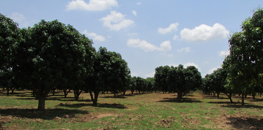 EVELYN FARMS- Growers and Exporters of Fruits(Mango)